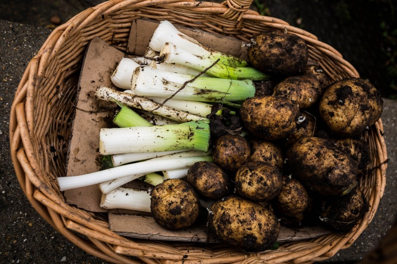 Leeks and potatoes blamed for E.coli outbreak