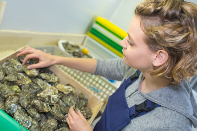 Three quarters of British oysters contain norovirus